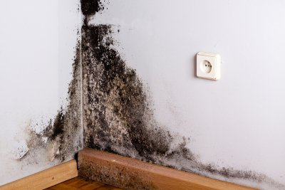 mold - growth